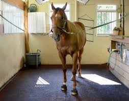 Teach Your Horse to Stand Calmly in the <b>Cross</b>-<b>ties</b> - Expert how-to ...