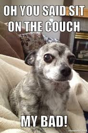Image result for dog ruined couch