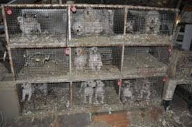 Image result for puppy mill