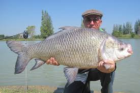 Image result for bangladeshi fisherman caught katol big fish pic