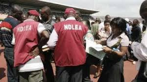 Image result for Adamawa NDLEA intercepts cars laden with drugs