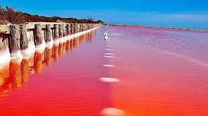 Hasil gambar untuk lake pink australia