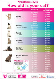How to tell your cat's <b>age</b> in human <b>years</b>   International Cat Care