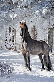 best ideas about horse racing two year olds aab3b24b2983f7cc190b94e45c1576b9 jpg
