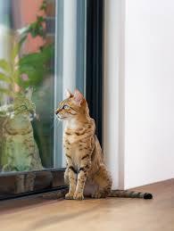 <b>Корм</b> для кошек <b>Pro Plan</b> - <b>ProPlan</b>.ru