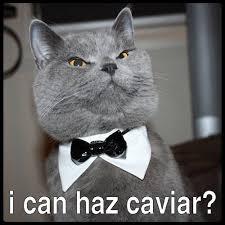 Search fancy cat meme images via Relatably.com