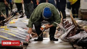 Tsukiji: <b>Japan's</b> famed <b>fish</b> market to relocate - BBC News