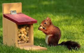 <b>Squirrel Feeders</b>: The Best of 2019 (6 total) - Bird Watching HQ