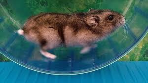 Resultado de imagen de raton corriendo