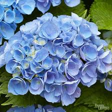 13 of the Most Stunning <b>Blue</b> Flowers