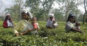 Tea Board to grade, rank all gardens in India