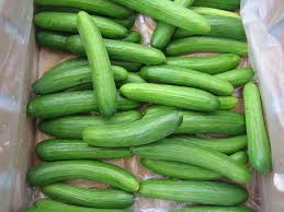 Image result for cucumbers