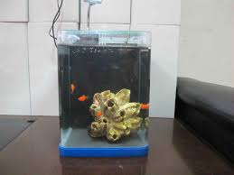 fish for office office tank front no logojpg aquarium office 1000 images