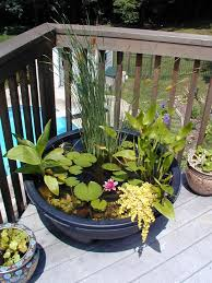 diy patio pond: mini pond in a poti love this