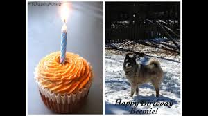 How to make a <b>Cake</b> For Your Birthday <b>Dog</b> - 4 All Natural ...