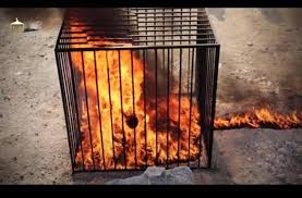 Image result for jordanian pilot burned to death