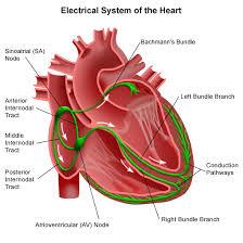 Logo for Cardiac Case Studies