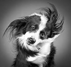 Image result for pets using wen shampooing