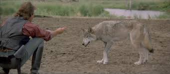 Image result for dancing with wolves gif