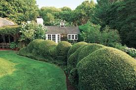 Image result for beautiful privet plants