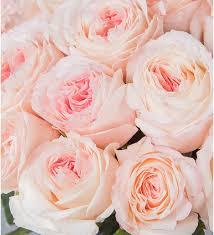 <b>Букет</b>-<b>соло</b> пионовидных роз Mayras Bridal (15,25,35,51,75 или ...