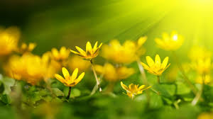 Image result for yellow