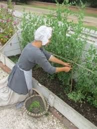 american colonial homes brandon inge: from the garden colonial williamsburg gardening blog