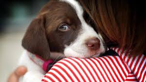 Best Dog Food for Sensitive Stomach 2020 | Dog Food Advisor