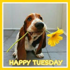 90 Best Happy Tuesday images | Happy tuesday, Animals, Animals ...