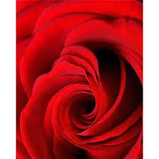 <b>Картина на холсте 40x50</b> Бутон красной розы — купить в ...