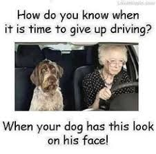 Image result for quotes about driving manual vs automatic
