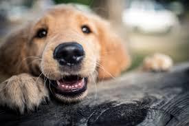 The Jumbo Reference List of Pet Puns : LifeLearn Inc.