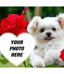 Free effect of love with a <b>cute puppy</b> and red <b>flowers</b> to add your photo