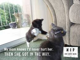 important_catnip_psas_11.jpg via Relatably.com