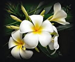 une fleur - blucat 25 septembre trouvée par Suri - Page 2 Images?q=tbn:ANd9GcTYLD7U_eDIi2hdj4TGtJ9uNDMiBh9aB9KcBzj_QGTDt-391WbK