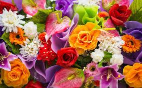 نتيجة بحث الصور عن زهور