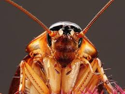 cucarachas tienen memoria cuento corto