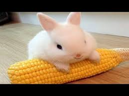 Funny and <b>Cute</b> Baby <b>Bunny Rabbit</b> Videos - Baby Animal Video ...