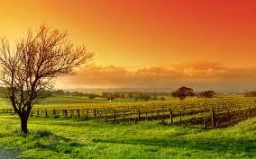 لكل محبي صور الطبيعة  اكبر تجميع لصور الطبيعة Images?q=tbn:ANd9GcTZ0btUtg3BPzclRHlN8q4XO5QhBhveXM9ZTUrOiGtE03_32LCYSw