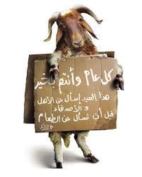 صح عيدكم ومتكثروش من اللحم images?q=tbn:ANd9GcT