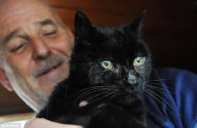 World weary: Mac the cat rests in the arms of his owner, Stuart Emery, after finally coming home from his six years living in the wild by a canal in ... - article-2117097-123BAB44000005DC-489_634x413