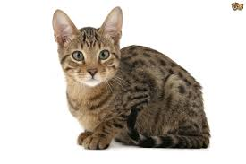 Image result for picture of cat
