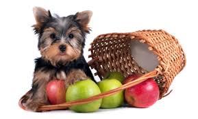 Ποια λαχανικά μπορούμε να δώσουμε στο σκύλο μας;