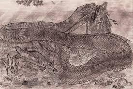 Image result for Titanoboa cerrejonensis