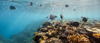 conservation of the great barrier reef wwf wwf reef crest dominated by robust branching corals and coralline algae great barrief reef copy wwf