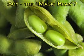 Image result for soy beans bad for you
