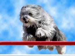 cães saltando