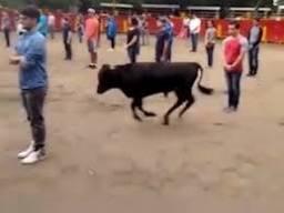 Meksika'da boğa deneyi