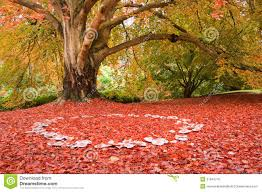 Image result for nature photos fall