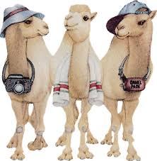 """Résultat de recherche d'images pour """"gifs animés de chameau"""""""